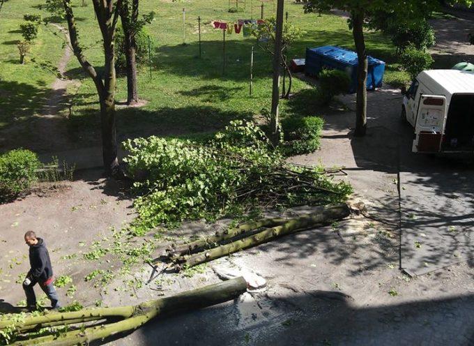 Golenie drzew na Towarowej