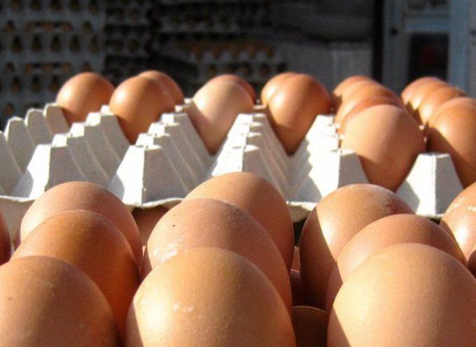 Król suszu jajecznego skazany