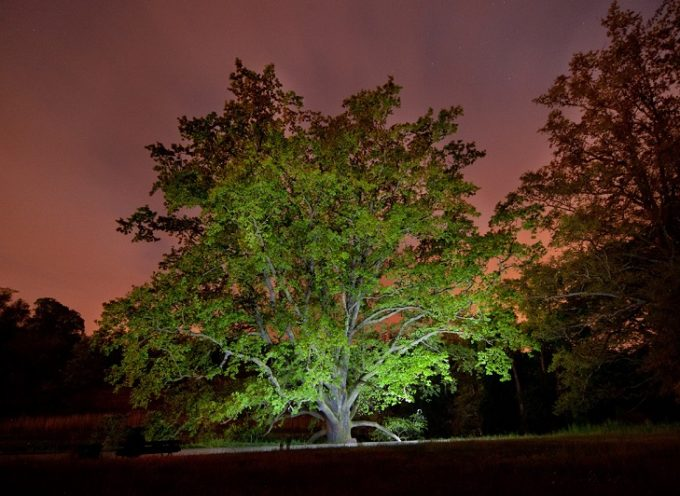 Zagłosuj na magiczne drzewo w Gołuchowie