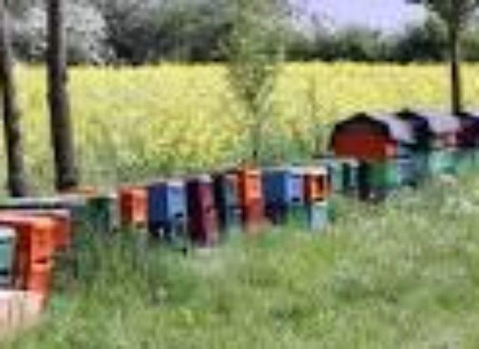 Pszczoły – lep na złodziei
