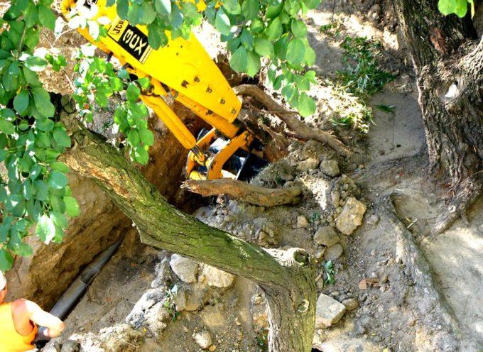 Mieszkańcy bronią drzew … w interncie