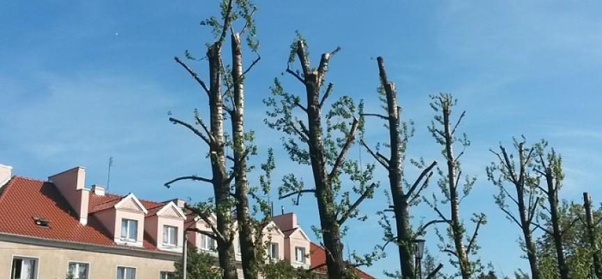 Miasto mówi: przycinka, a mieszkańcy mówią: kolejne golenie drzew