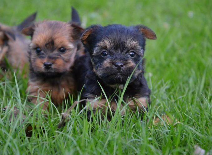 Weźmiesz psa ze schronisko – nie zapłacisz podatku