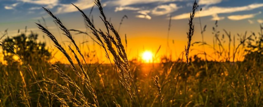 Targi Rolno-Ogrodnicze w Przygodzicach 2019