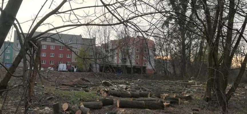 Kolejne drzewa pod topór