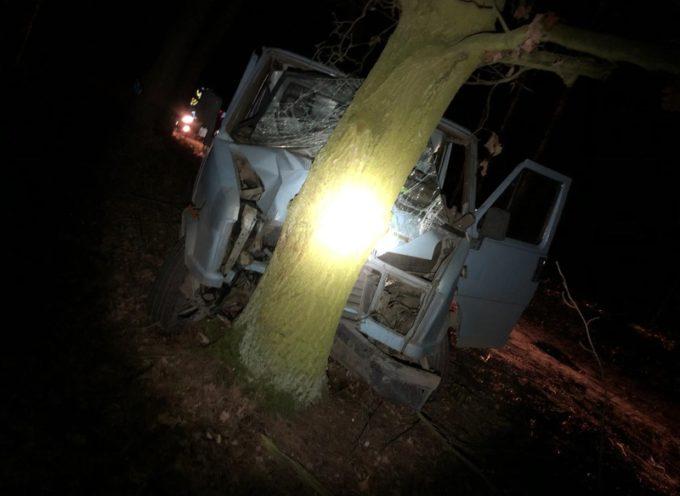 Ucieczka przed policją zakończona na drzewie
