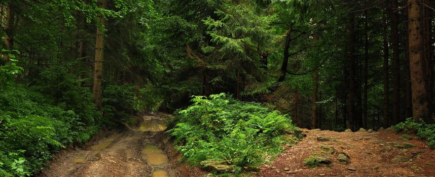 Las i owszem, ale unikajcie tłoku