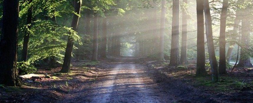 Kto i przed kim musi bronić lasów