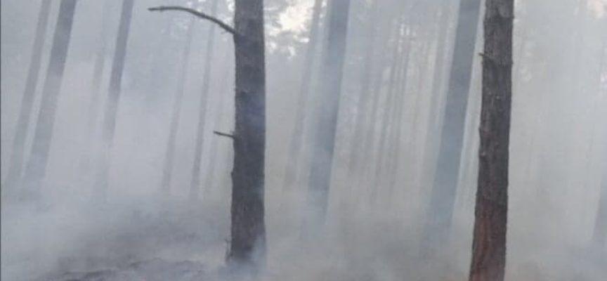 Podpalenie w lesie