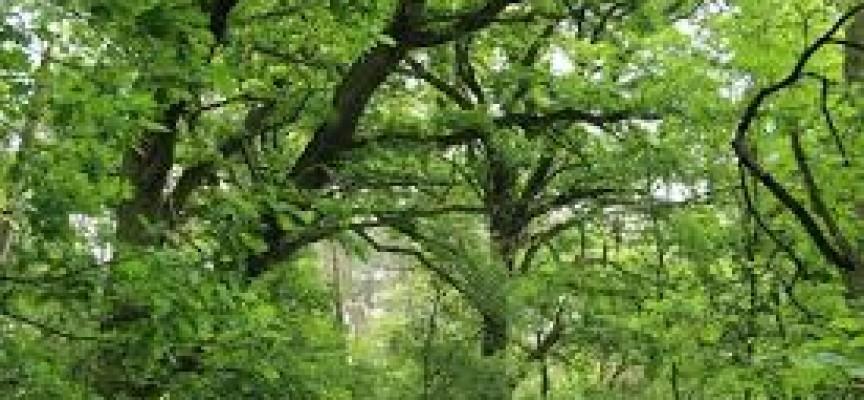 Policzyli drzewa – jest aż 10 pomników przyrody