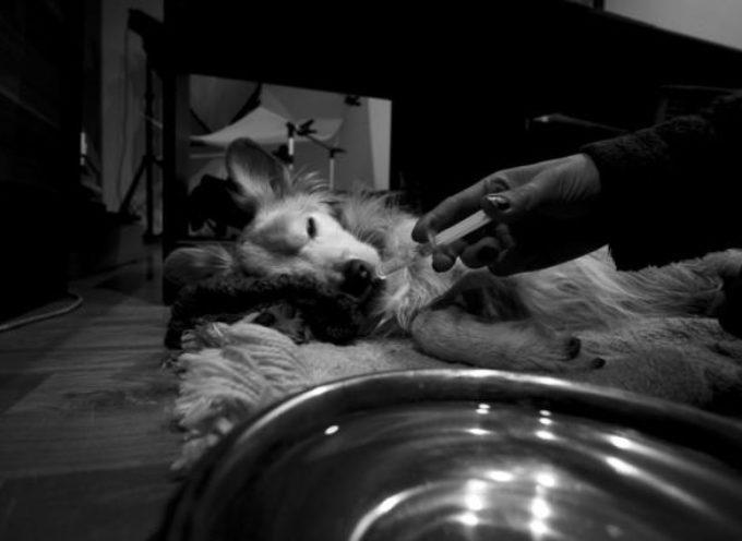 Historia umierania psa – nagrodzona