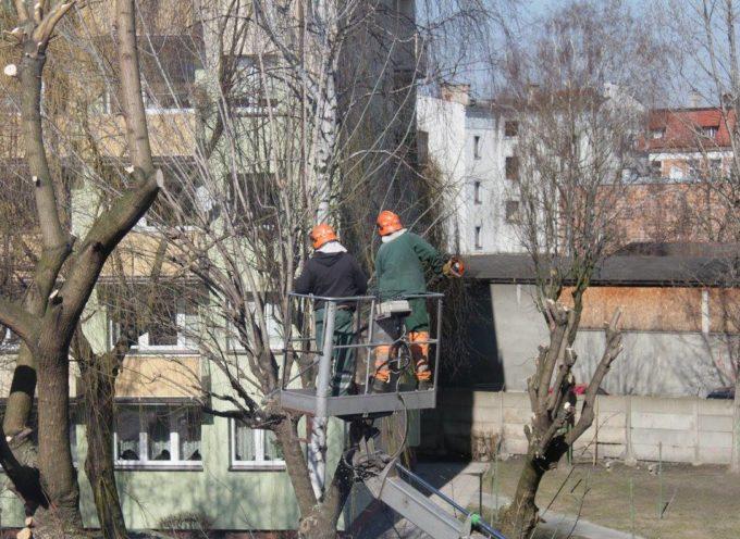 Mieszkańcy alarmują – kolejne drzewa wycinane
