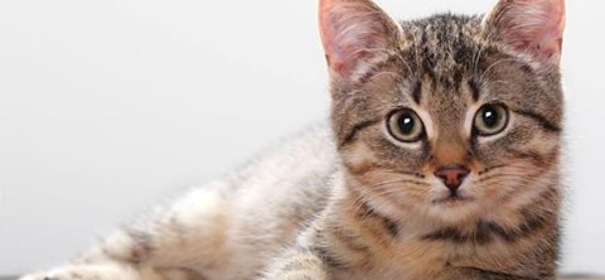 Będą sterylizowane koty w Ostrowie?