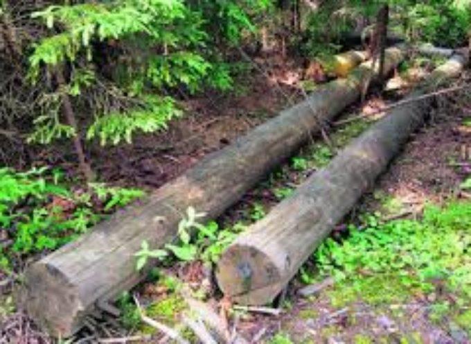 15-metrowe drzewo przygniotło mężczyznę