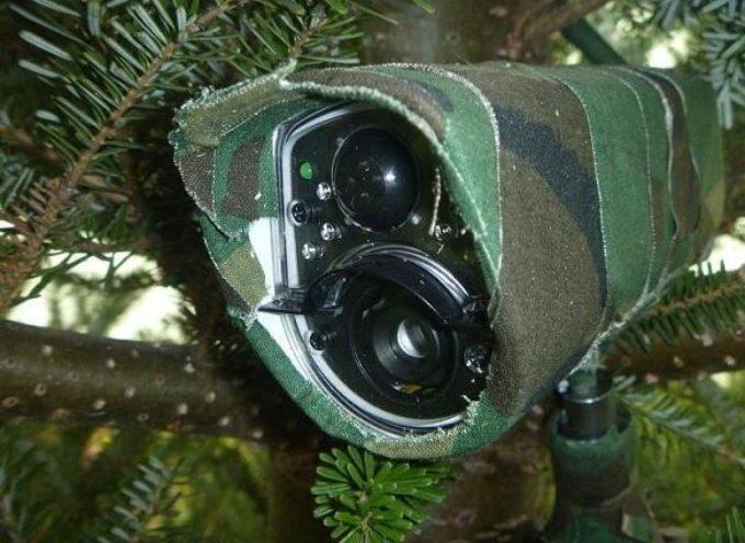 Kamery w lasach zdają egzamin