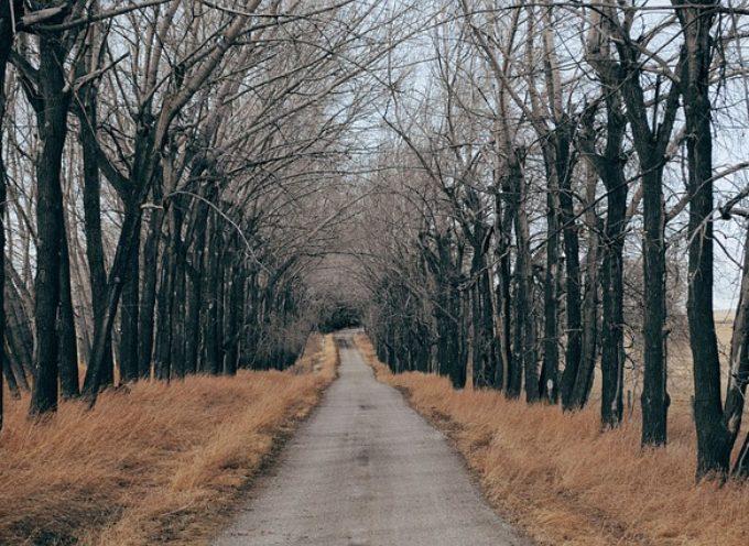Powiat Kaliski przebuduje drogę powiatową razem z Nadleśnictwem Kalisz