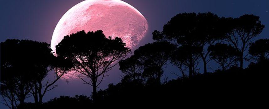 Różowy księżyc na pociechę