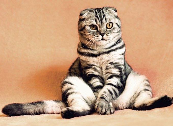 Koty, psy… jednak niebezpieczne?