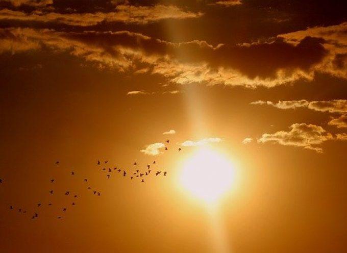 Obserwatorzy ptaków w Ostrowie