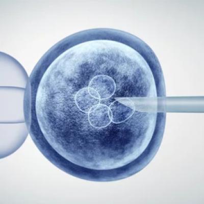 Czy wróci miejskie in-vitro?